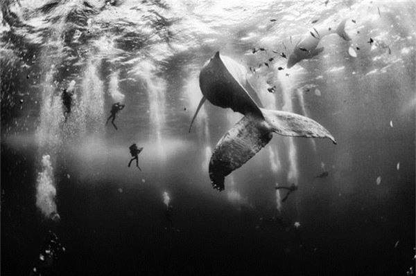 Bức ảnh giành giải thưởng cao nhất trong cuộc thi năm nay thuộc về tác giả Anuar Patjane, với hình chụp những chú cá voi lưng gù ở đảo Roca Partida, Revillagigedo, Mexico.
