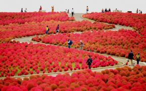 10 địa điểm lý tưởng để ngắm mùa thu khi du lịch Nhật Bản