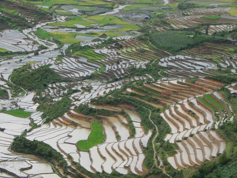 Mù Cang Chải mùa nước đổ năm 2015