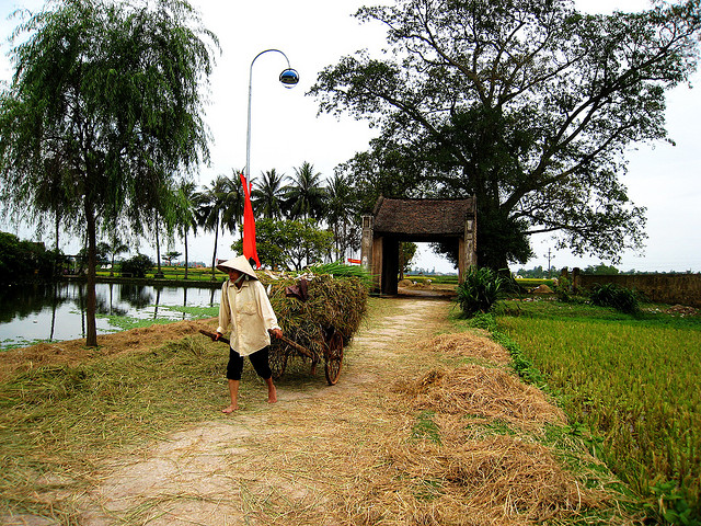Làng cổ Đường Lâm với đặc trưng cây đa, giếng nước, sân đình