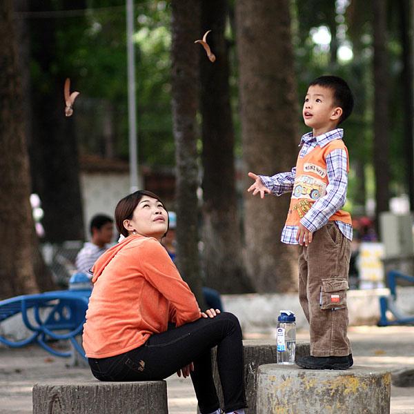 Chò nâu đã làm cho Sài Gòn thêm đẹp và không kém phần lãng mạn.