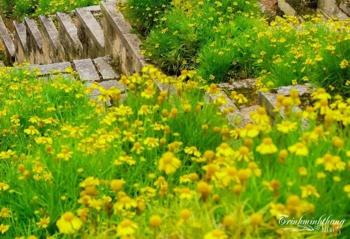Thành phố Đà Lạt luôn được bao phủ bởi sắc hoa