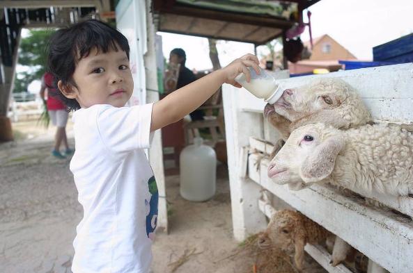 """2 trại cừu cực """"Tây"""" ngay giữa Thái Lan"""