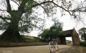 Về thăm làng cổ Đường Lâm trong ngày