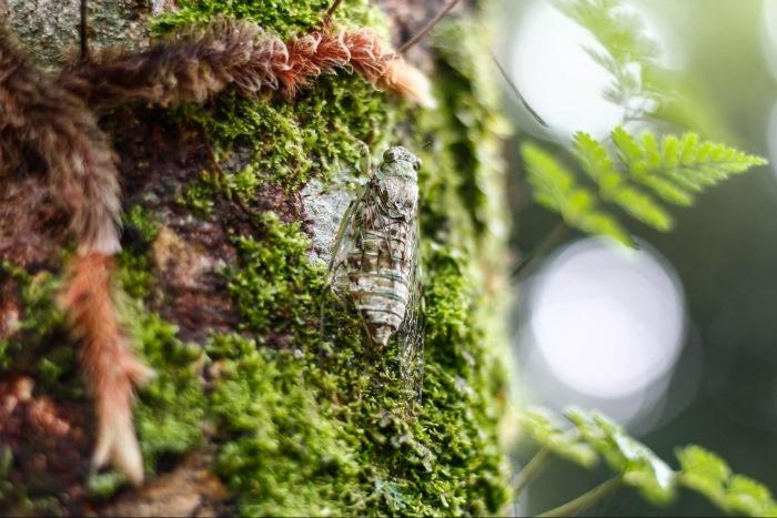 Thảm thực vật ở Đanbri