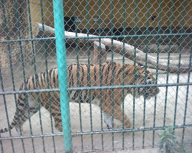 Động vật trong công viên Thủ Lệ