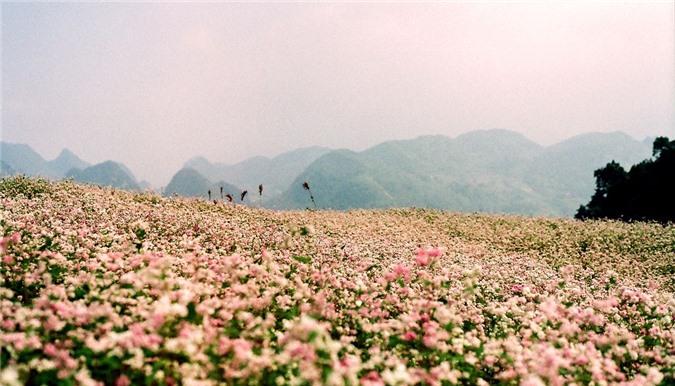 Hà Giang, Phan Thiết, Tây Nam Bộ, Đà Lạt, Phú Quốc, điểm đến tháng 10
