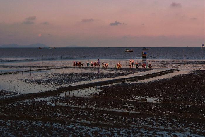 Người dân cào nghêu trên bãi biển