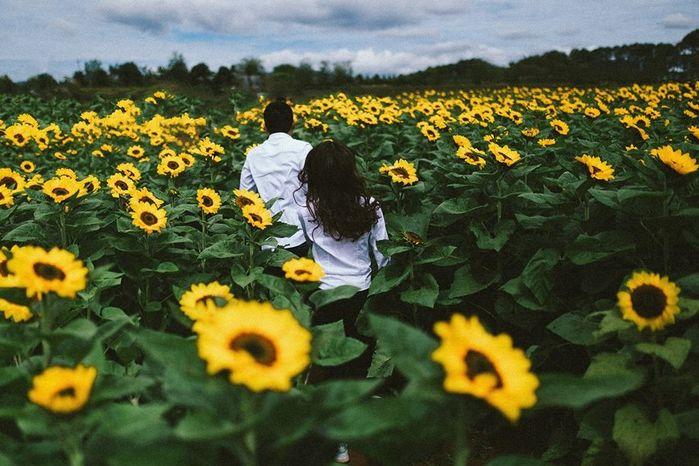 hoa hướng dương Đà Lạt