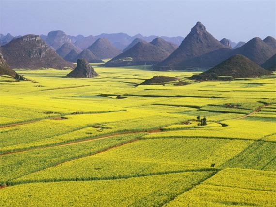cánh đồng hoa cải La Bình, công viên Hitsujiyama, thị trấn Bo-Kaap, Hallstatt