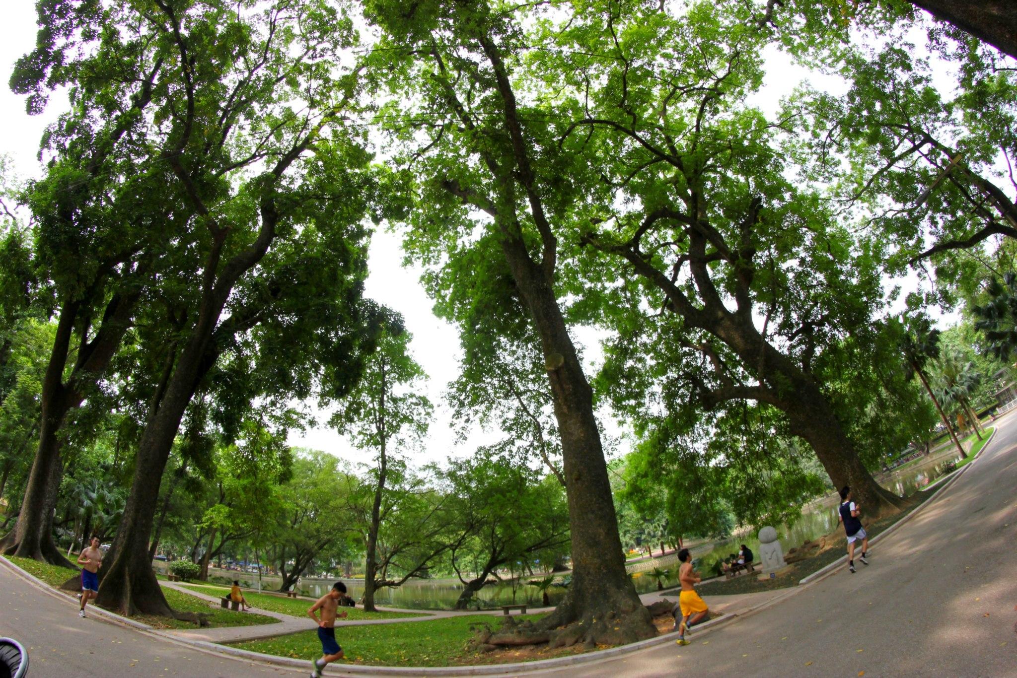 Công viên Bách Thảo với rất nhiều cây cổ thụ lớn