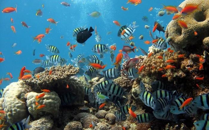 Thế giới dưới lòng biển Phú Quốc