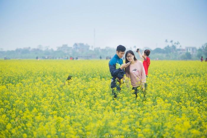 Từ trung tâm thành phố Thái Bình xuống đến thôn Hội Khê chỉ khoảng 20 km, du khách có thể dừng chân tham quan, chụp ảnh ở đồng cải đang vào mùa trổ bông.