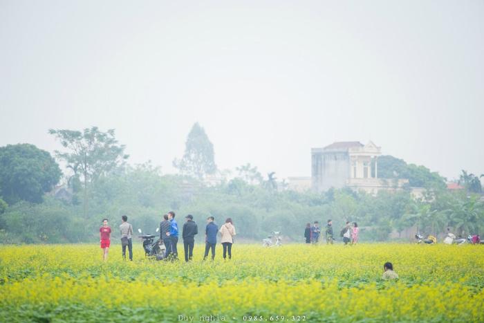 Những ngày này, về xã Hồng Lý bạn sẽ bị ấn tượng ngay bởi một màu vàng tươi của cánh đồng hoa cải trải dài bạt ngàn, ngút mắt.