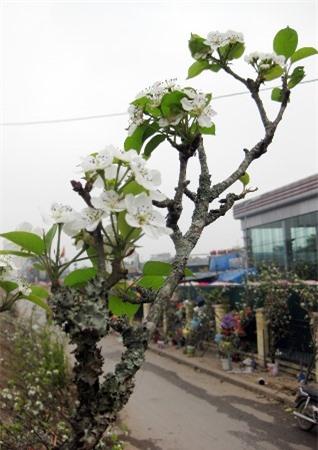 Từng bông hoa đọng chút mưa đẹp long lanh trong gió lạnh.