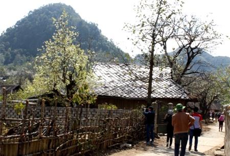 Vẻ đẹp trắng tinh khôi giữa núi rừng Tây Bắc đã hút hồn nhiều du khách mỗi khi lên đây.
