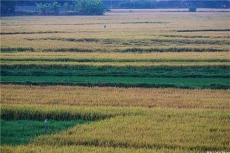 Du lịch Phú Yên ngắm cảnh đồng quê mộc mạc và bình dị
