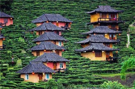 Du lịch Thái Lan ngắm ngôi làng trên đồi chè đẹp như bích họa