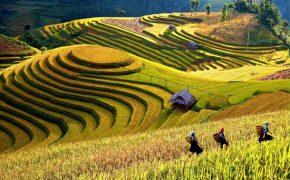 Kinh nghiệm du lịch Yên Bái