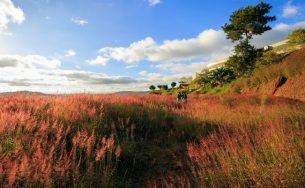 Đồi cỏ hồng đẹp như tranh ở Đà Lạt bạn nhất định phải đến một lần trong đời