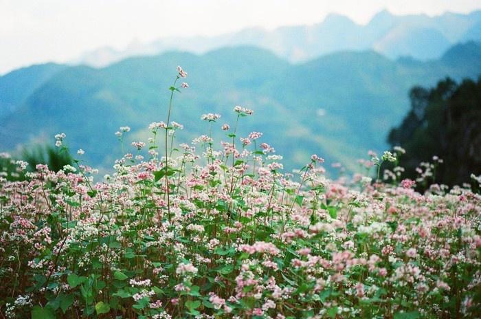 Màu hoa dịu dàng và cuốn hút kì lạ