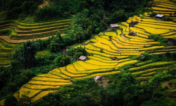 Màu lúa chín phủ trên các ruộng bậc thang Hà Giang
