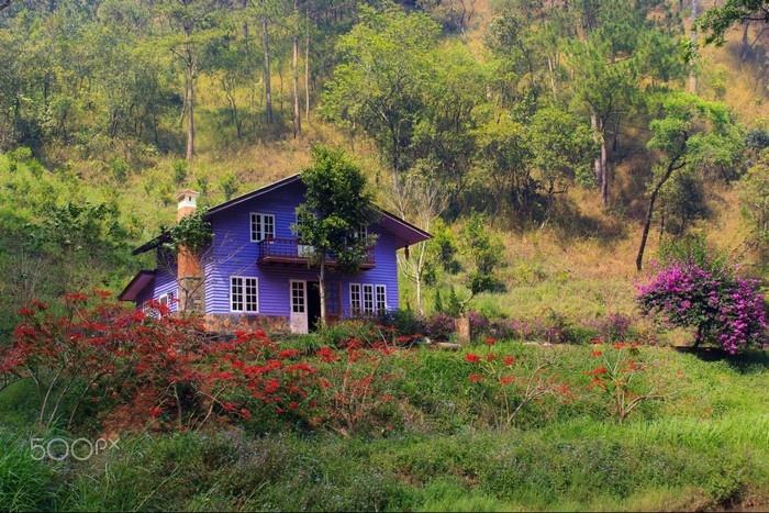 Ẩn sau trong núi rừng Đà Lạt có một nơi tên Ma Rừng Lữ Quán bí ẩn với không gian lãng mạn của hoa cỏ