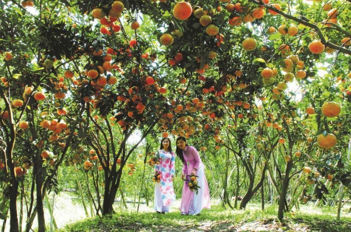 Vườn cây trái xum xê - Ảnh: sưu tầm