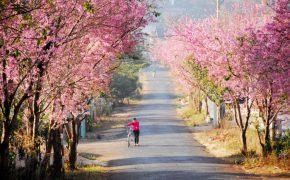 Những thiên đường du lịch làm say lòng người trong mùa xuân