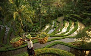 Giải đáp 10 câu hỏi thường gặp khi du lịch đảo Bali