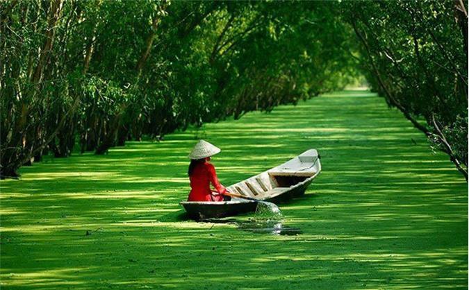 Rừng tràm trà sư nổi tiếng của An Giang