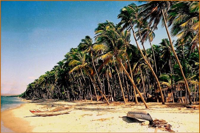 Rặng dừa biển Hàm Tiến