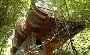 Ngắm ngôi nhà trên cây độc đáo giữa rừng xanh