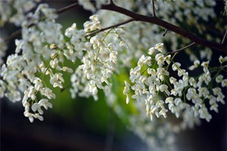 Những bông hoa mỏng manh khẽ lay trong gió nhẹ