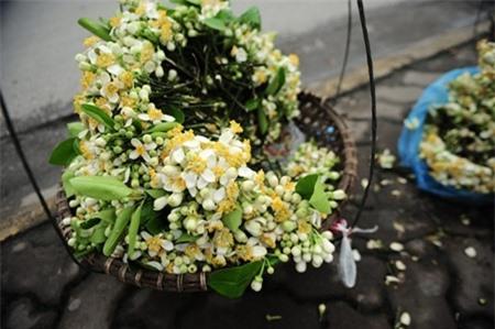 Gánh hàng hoa bưởi trên phố