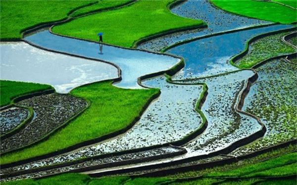 Trang Telegraph miêu tả ruộng bậc thang ở Việt Nam là một trong những cảnh quan có màu xanh nổi bật nhất thế giới. Tờ báo Anh cũng nhắc đến đây là nước xuất khẩu gạo lớn thứ hai trên thế giới.