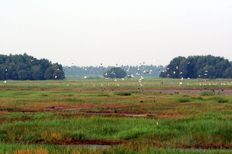 Vườn quốc gia Chàm Chim
