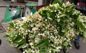 Tháng 3 gọi tên của những mùa hoa đẹp nhất miền Bắc