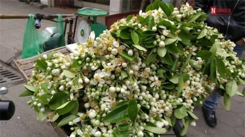 Hà Nội tháng 3 về và thành phố mùa hoa đẹp nhất miền Bắc