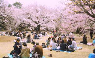 Kinh nghiệm du lịch Nhật Bản tự túc không thể bỏ qua
