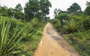 'Công viên kỷ Jura' thu nhỏ ấn tượng ở Hà Nội