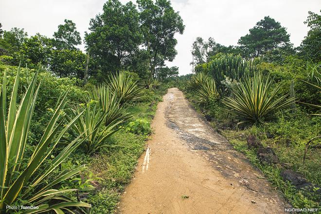 Thực chất, đây là một vườn xương rồng bỏ hoang ở vườn quốc gia Ba Vì, cách trung tâm Hà Nội gần 60 km. Với hàng trăm loại xương rồng lớn nhỏ được mang từ nhiều nơi về đây nhằm mục đích nghiên cứu và nhân giống.