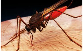 Phòng tránh và xử lý côn trùng cắn khi đi phượt