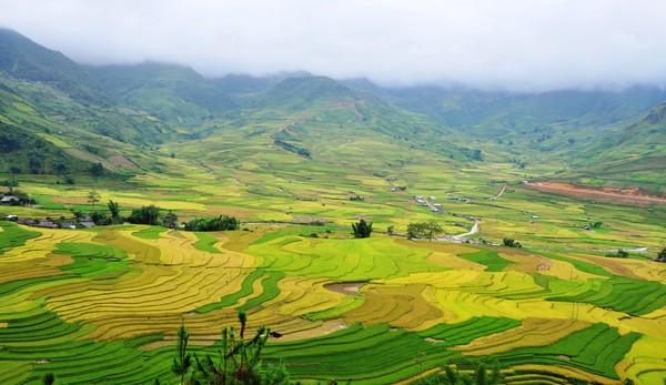 Ruộng bậc thang Lìn Mông – Ảnh: Wikipedia