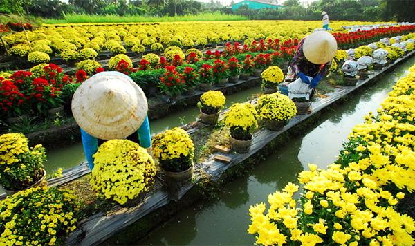 Vẻ đẹp hút hồn ở vườn hoa Tân Quy Đông