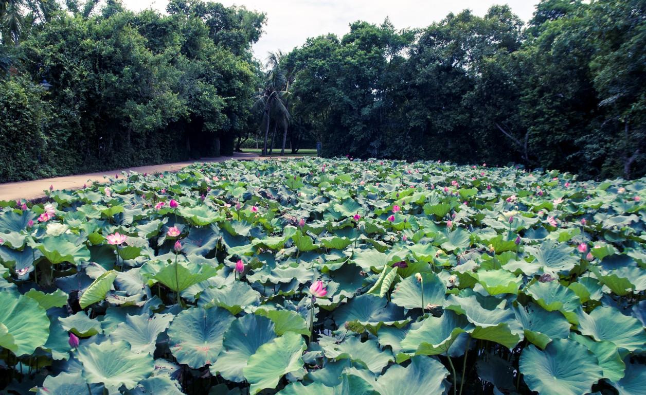 Di tích làng Sen – Ảnh: dulichvietnam