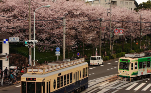 7 địa điểm ngắm hoa anh đảo đẹp nhất Tokyo, Nhật Bản