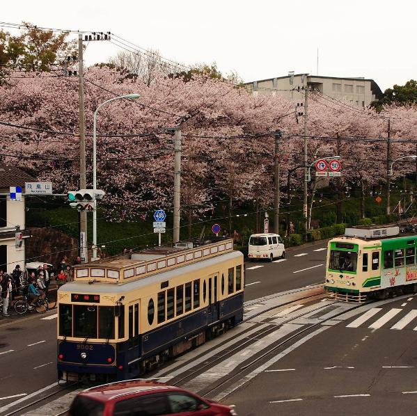 Nếu bạn muốn ghé thăm nơi ngắm hoa anh đào xưa nhất Tokyo thì đừng bỏ qua công viên Asukayama. Công viên này có gần 650 cây anh đào trồng quanh ngọn đồi và lối đi với không gian mở nằm giữa trở thành nơi lý tưởng cho việc ngắm hoa anh đào hoặc dạo quanh buổi tối với ánh đèn lung linh.