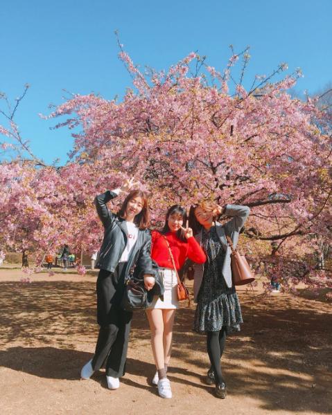 Cuối tháng 3 đến đầu tháng 4, con đường hoa anh đào trong công viên Ueno (thuộc Taito-ku, Tokyo) với hơn 1.000 cây nằm ở trung tâm công viên trở nên nhộn nhịp bởi du khách từ mọi miền Nhật Bản lẫn quốc tế đến ngắm hoa. Kèm theo hoạt động thưởng hoa, công viên còn tổ chức những sự kiện khác chào mừng mùa hoa anh đào như hội chợ đồ cổ, dã ngoại, hay các trò chơi ngoài trời.