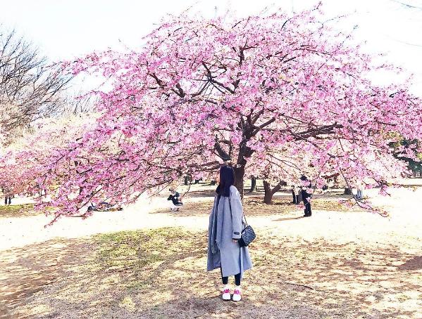 Đây là công viên rộng thứ 5 trong số 23 quận của Tokyo, không có nhiều cây hoa anh đào như vương quốc gia nhưng công viên Yoyogi lại nổi tiếng với những buổi tụ họp của dân cosplay và các hội chợ. Không những thế, hoa anh đào ở công viên Yoyogi màu đậm hơn và thường nở sớm hơn. Tại đây thường diễn ra lễ hội truyền thống của Nhật Bản với tên gọi Hanami thường diễn ra vào cuối tháng 3 đến đầu tháng 4.